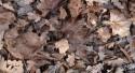 Bruciare rami e foglie secche nel proprio giardino? E' reato penale